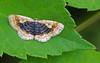 Forest Moth 1 (mishko2007) Tags: moth 105mmf28 korea