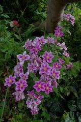 1479-13L (Lozarithm) Tags: caenhill devizes wilts canals kennetavon flora flowers k50 pentax zoom 1855 smcpda1855mmf3556alwr