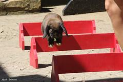 234A8338.jpg (Mark Dumont) Tags: animals bbb cincinnati dumont mammal mark zoo