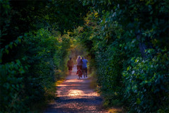 Kämpe - Abendlicht (flechris) Tags: sommer summer esate lato natur nature natura lanschaft landscape krajobraz campagna urdenbach kämpe