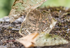 Bug Deli. (Omygodtom) Tags: leaves outside composition coth5 plants rural macro dof bokeh nature natural nikkor tamron usgs usg abstract
