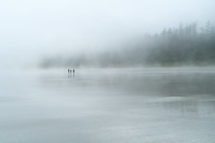 Walk in the mist, Long Beach, Vancouver Island, BC (www.clineriverphotography.com) Tags: 2018 longbeach canada location britishcolumbia vancouverisland flora