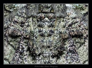 moth stack ps b2