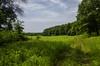 Prairie Clearing ((chris-gill)) Tags: nachusa grasslands trail prairie trees sky grass illinois