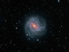 Messier 83 (Astroshed) Tags: m83 messier83 galaxy galaxies d deepspace space astronomy astrophotography hydra astroshed astrometrydotnet:id=nova2636016 astrometrydotnet:status=solved