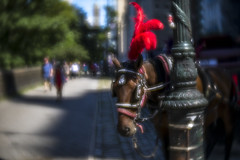 Summer Plume (Steven Strasser) Tags: horse carriage buggy centralpark newyorkcity nyc summer soft blur softfocus red