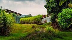 The Sugar Cane Express (Black Dog Photography Melbourne) Tags: shed tin rust railway sugar railtracks sugarcane queensland