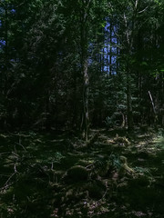 light at play (De Lambo) Tags: landscape enchanted forest green ireland shady trees woodland woods