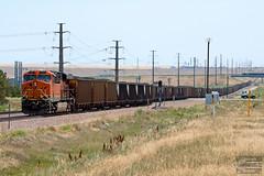 BNSF Power Sharing (ColoradoRailfan) Tags: uplimonsub limonsub coaltrain bnsf bnsfrailway