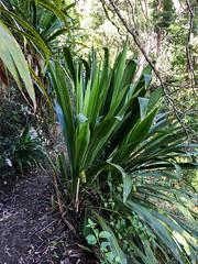 Lily ([S u m m i t] s c a p e) Tags: springbrooknationalpark hiking trailrunning springbrook queensland australia