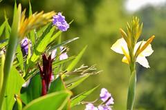 Summertime (KaDeWeGirl) Tags: pennsylvania kennett square longwood gardens flowers summer sun sunlight green