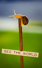 see the world (auntneecey) Tags: snail travel seetheworld series words 365the2018edition 3652018 day188365 07jul18