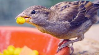 Bird - 5503