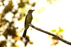 Ave contraluz (Sergio_Pérez) Tags: ave pájaro ef75300mm ef75300 eosrebelt6 canoneosrebelt6 canoneost6 bacalar bellezanatural
