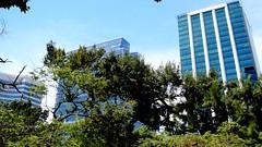 Nature & Buildings (Raúl Alejandro Rodríguez) Tags: árboles trees reserva ecológica edificios buildings buenos aires argentina