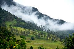 Valle del Cocora (JACCO // Urbano) Tags: colombia valledelcocora quindio paisaje palmadecera neblina árboles campo rural jacco