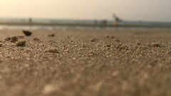 Beach Life (preze (very busy)) Tags: colvá colva colvabeach goa westcoast saxtticheyead whitesandbeach indien india strand beach sand krabbe krebs crab