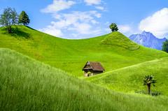 Hills of green (albisserl) Tags: pilatus montain hut tree switzerland meadow hill green cantonlucerne luzern schweiz che