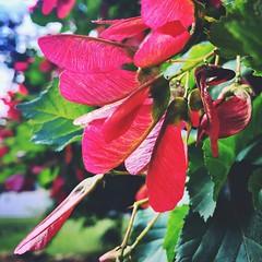 #iphone6s #flower #sunshine #tree #russia #moscow #beautiful #amazing #springisgreen (vkryazh) Tags: iphone6s flower sunshine tree russia moscow beautiful amazing springisgreen