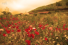 Ecomuseo El Tanque (nauzetNZT) Tags: el tanque tenerife islas canarias canary island paraiso paradise ecomuseo flores flowers paisaje belleza beautifull