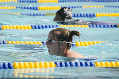 SONC SummerGames18 Tony Contini Photography_1159 (Special Olympics Northern California) Tags: 2018 summergames swimming swimmer athletes femaleathlete water specialolympics