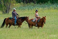 Riders At Cherry Creek State Park (dcstep) Tags: dsc7910dxo horse horses man woman riding grass cherrycreekstatepark colorado usa aurora sonya9 fe100400mmf4556gmoss fe20xteleconverter allrightsreserved copyright2018davidcstephens dxophotolab nature urban urbannature