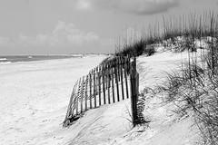 Beachy (pjpink) Tags: beach ocean sea fence fencing blackandwhite bw monochrome coast coastal eastcoast crystalcoast sand shore capelookout northcarolina nc carolina may 2018 spring pjpink 2catswithcameras