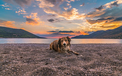 A cute dog at sunset (Vagelis Pikoulas) Tags: dog tokina porto germeno europe greece beach sunset sky canon 6d 2018