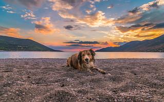 A cute dog at sunset