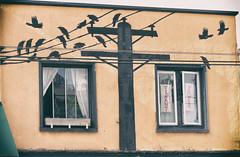 Tenant Power (annapolis_rose) Tags: vancouver broadway theblacklodge restaurant crows birds streetart windows
