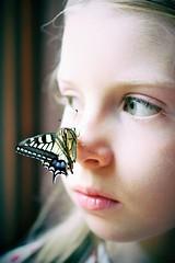 butterfly portrait (Angelo Petrozza) Tags: butterfly macaone macaon lepidopthera lepidoptera farfalla ali fly portrait ritratto eyes occhi green verdi blonde biondi angelopetrozza hd35mmmacrolimited