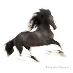 Friesian abstracted (pixellesley) Tags: friesian horse equine fineartphoto lesleygooding mono panning blur action movement abstract contemporary