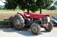 Massey Ferguson 135 (samestorici) Tags: trattoredepoca oldtimertraktor tractorfarmvintage tracteurantique trattoristorici oldtractor veicolostorico mf