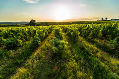 Ardenay (PaaulDvD) Tags: chalonnes loire layon loirevalley sunset vigne wine vin colors blue sun unesco