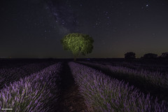 Time of lavender. (BelénRomero.) Tags: lavender night nature milky way lavanda brihuega