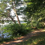 Forest trail by  a lake in summer sunshine thumbnail