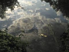 Waterlow Park Pond (Steve lunn) Tags: park north london highgate