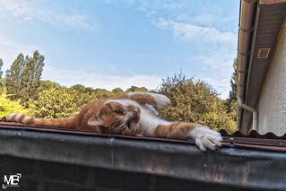 le chat sur le toit DxOFP+DFLM8+Z18 1002028