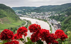 Moselle View (Mariannevanderwesten) Tags: moezel moselle cochem view uitzicht rood red bloemen duitsland germany nature natuur nikon