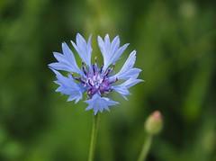 Flowerpower (M_Strasser) Tags: switzerland olympus suisse schweiz svizzera olympusomdem1