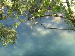 Χλωρίδα πάνω απο το ποτάμι!!   P1040624 (amalia_mar) Tags: 7dwf flora green river water etoloakarnania nature χλωρίδα πράσινο ποταμόσ εύηνοσ αιτωλοακαρνανία νερό φύση amaliamarinopoulou