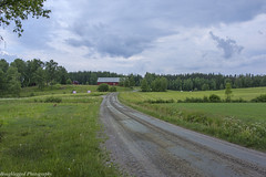 IMGP1671 (roughlegged) Tags: photography apsc pentax k3ii sweden summer landscape country countryside rural pastoral field crops gravel road