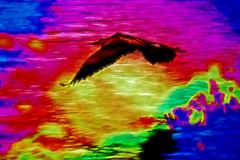 Releasing the Rainbow (Karen Kleis) Tags: challenge arteffects photomanipulation rainbow heron greatblueheron sharingart hypothetical