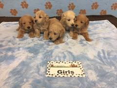 Roxie Girls 6-17