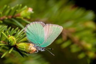 Still Very Green - _TNY_4561