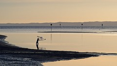 Casting the net (noompty) Tags: nudgee brisbane winter queensland fishing water on1pics photoraw2018 k1 pentax hddfa70200mmf28eddcaw