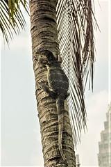 THL0329 (deandenby86) Tags: thailand phuket au nang ladyboys elephant lizard krabi karon bangkok