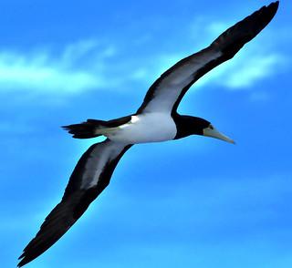_DSC0330 Sea bird