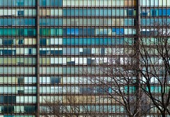 NYC Arch & Trees #44 (Ximo Michavila) Tags: nyc tree winter newyork city usa abstract windows building urban ximomichavila graphic architecture archdaily archidose archiref glass lines contrast