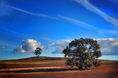 Blue Sky (holly hop) Tags: trees landscape bush farm rural australia centralvictoria victoria emu bluesky clouds